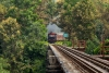 Train to Patalpani 137 - After looping around the spiral Train 52973 emerges through the forest and onto the viaduct